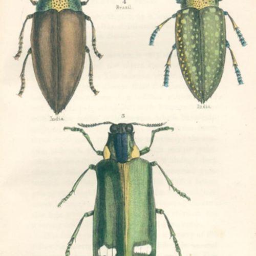 Konvolut 的11卷,来自多卷动物学系列,各种装订。装订。 包含:╗ Kaup,J.J. Das Thierreich in seinen Hauptfo…