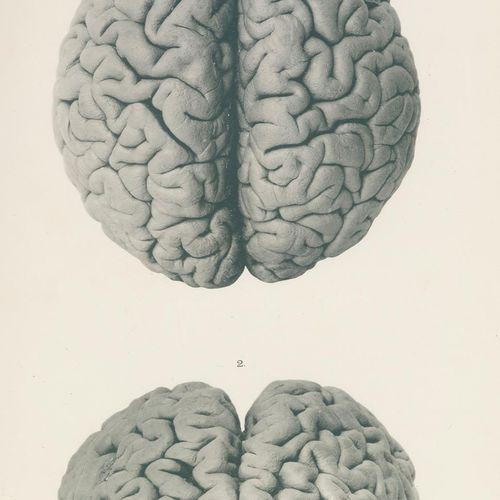 Retzius,G. 生物学调查。新系列。该系列的7卷(共19卷)。Jena u. Stockholm, G.Fischer 1902 14. Fol.附有14…