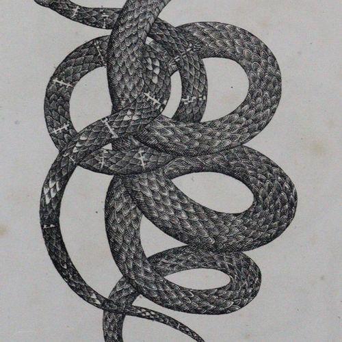 (Buhle,C.A.). 两栖动物。Halberstadt, Brüggemann u. Pest, Wigand (c. 1835).Gr.8°。有74张(…