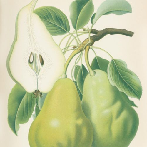 Goethe,R. U.A. (Hrsg.). Pommes et poires. Les plus importantes variétés allemand…