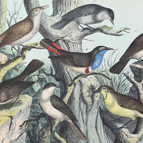 Schubert,G.H.V. 动物、植物和矿物王国的自然史....丛书中的4卷,在verch.编制。Esslingen, Schreiber 1866 ff.…