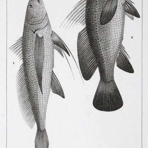Turpin,P.J.F. 自然科学词典》,第53册,平面图。巴黎,Levrault 1828年。40张(部分彩色)铜板。2张。松散在OU中,有丝带。(棕色和有…