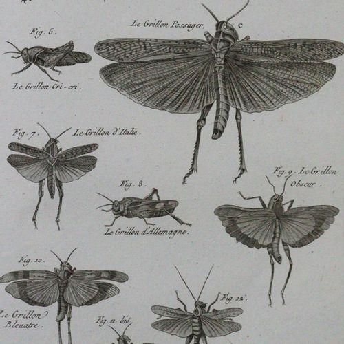 Latreille,(P.A.). Histoire Naturelle......。昆虫类。(巴黎1818年)。4°.有165块铜板。当时的装订厂。有棱角的边…