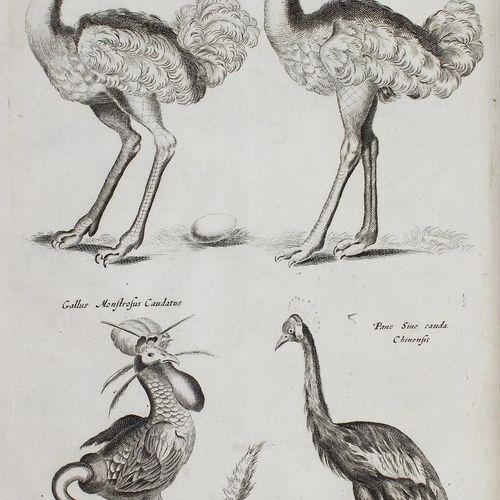 Jonston,J. Theatrum universale omnium animalium piscium, avium, quadrupedum, exa…
