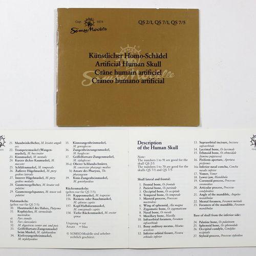 Totenkopf 3 anatomische Modèles du 20ème siècle. Somso et Coburger Lehrmittelans…