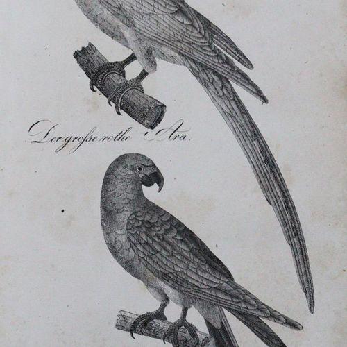 (Buhle,C.A.). 忠实的插图和详细的描述中的自然历史。(第二卷):鸟类。文本和地图集共1卷。Lpz., Eisenach 1835. 4°.有石版画标…