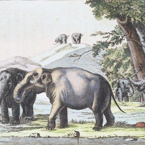 (Wilhelm,G.T.). 该书的第一部分是关于哺乳动物的历史。2卷,第2版,完全修订,非常缩减的版本 奥格斯堡,Engelbrecht 1806 08。 …