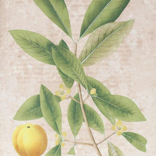 (Mann,J.G. 国外的药用植物。22次交付。Stgt, Brodhag 1830 1833年或以后)。)Fol.附有132幅手绘石版画,每幅画都有题字。文…