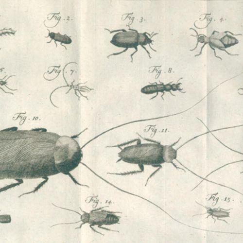 Linne,C.V. 根据第十二期拉丁文版的完整自然系统....有详细的解释...作者:P.L. Statius Müller。Tle.5 u. 6 (v.6)…