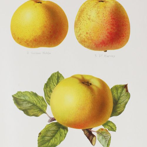 Bull,H.G. The Herefordshire Pomona, 包含最令人尊敬的各种苹果和梨的原始数字和描述。2卷。Hereford, Jakeman …