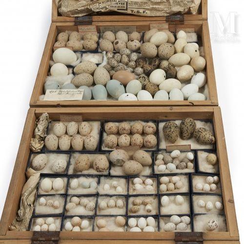 OEUFS D'OISEAUX Rare ensemble d' environ 150 œufs présenté dans deux boites iden…