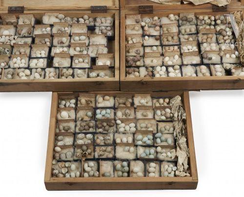OEUFS D'OISEAUX Rare ensemble d' œufs présenté dans trois boites identiques (40 …