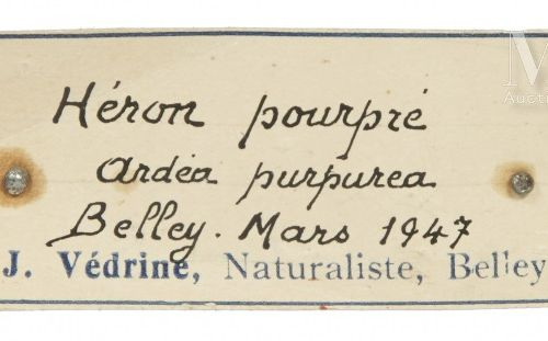 HÉRON POURPRÉ Ardea purpurea.    Provenance  Collection Joseph Védrine (1928 196…