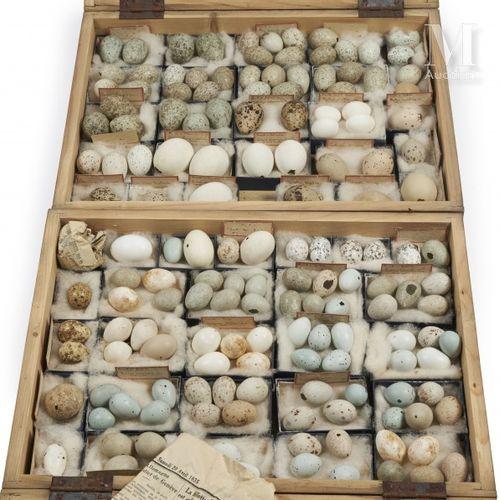 OEUFS D'OISEAUX Rare ensemble présenté dans deux boites identiques (40 x 30 cm).…