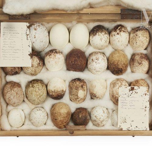 OEUFS D'OISEAUX Rare ensemble de 28 œufs de rapaces présenté dans une boite (40 …