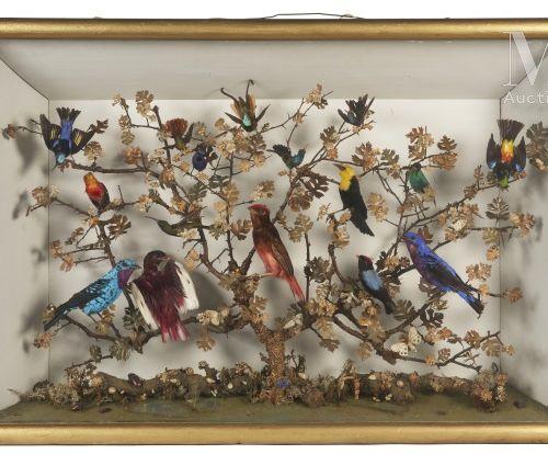 DIORAMA Comprenant seize oiseaux perchés sur des branchages feuillagés. La base …