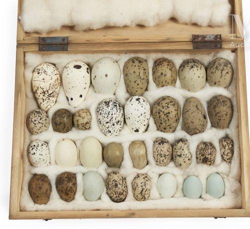 OEUFS D'OISEAUX Rare ensemble de 32 œufs d'oiseaux présenté dans une boite (40 x…