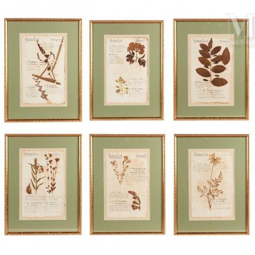 SIX PLANCHES D'HERBIER 1816.  Dans des cadres à baguettes dorées. 55 x 41 cm.   …