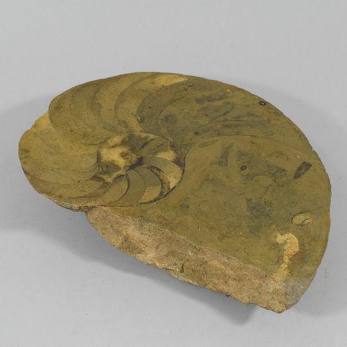 Ammonite fossilisée.  Tranche polie.  Quelques égrenures.  Dim. : 25 x 20 x 5 cm…