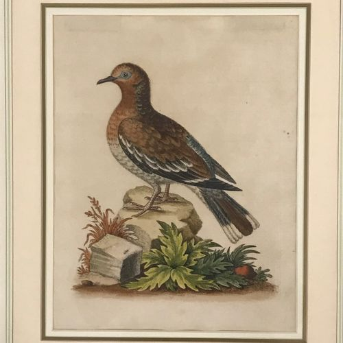 George Edwards  Paire d'estampes en couleur sur papier  Oiseaux  L'une signée et…