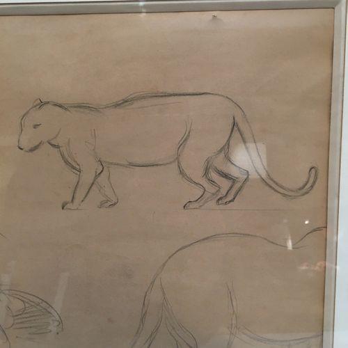 Feline  Bearing a Steinlen signature  25.5 x 40 cm