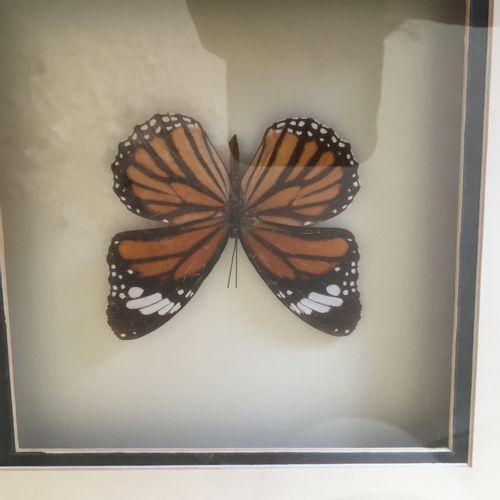 Trois encadrés papillons