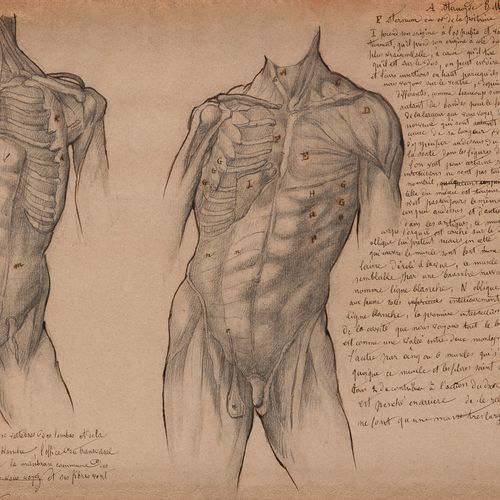19th century French schoolTwo studies of anatomyBlack pencil , pen and brown ink…