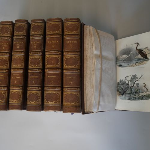 BUFFON AND LACEPEDE. 8 large volumes in 8°. Full brown morocco basane, spine dec…
