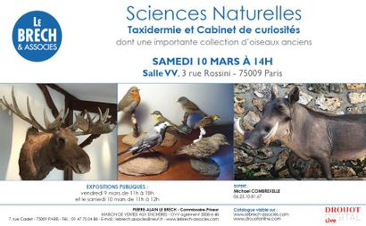 SCIENCES NATURELLES, TAXIDERMIE ET CABINET DE CURIOSITES