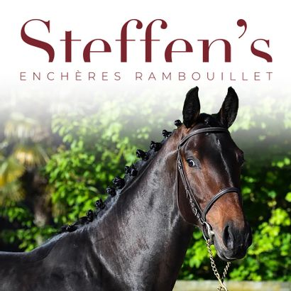 Sports Horses - Summer Sale