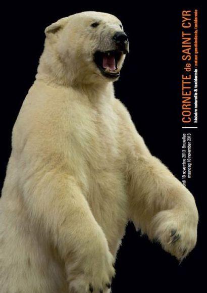 Histoire naturelle - taxidermie - trophées de chasse