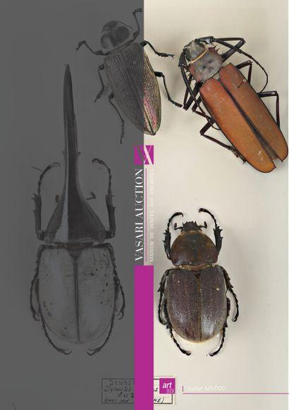 Le bestiaire III de Vasari Auction - Taxidermie, Animalia, Entomologie