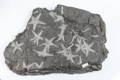 Minéraux et Fossiles, Gastéropodes Terrestres et Marins, Météorites