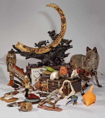 Taxidermie - Chasse