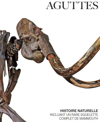 HISTOIRE NATURELLE – incluant un rare squelette complet de mammouth