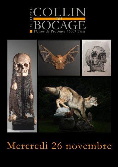 Vanités et histoire naturelle