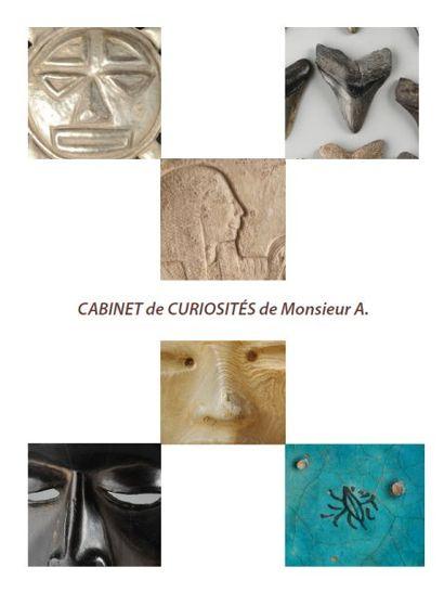 CABINET DE CURIOSITÉS : Dents de requins Minéraux Animaux naturalisés Archéologie grecque et romaine